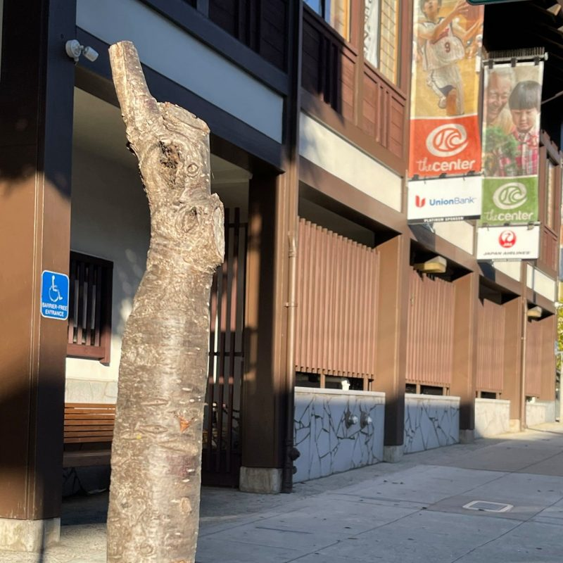 Vandals Destroy 50 Year Old Cherry Blossom Trees In Sf Japantown 247 News Around The World