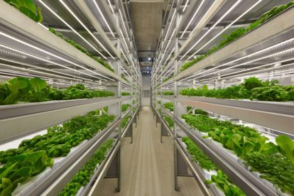 3 Emerging trends in vertical farming that will cultivate the future of agriculture