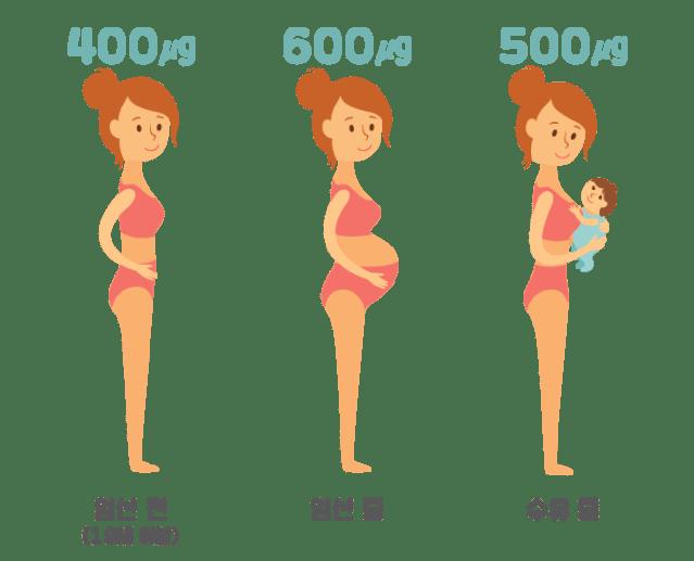 임신 13주차 임신과 엽산 (1).png