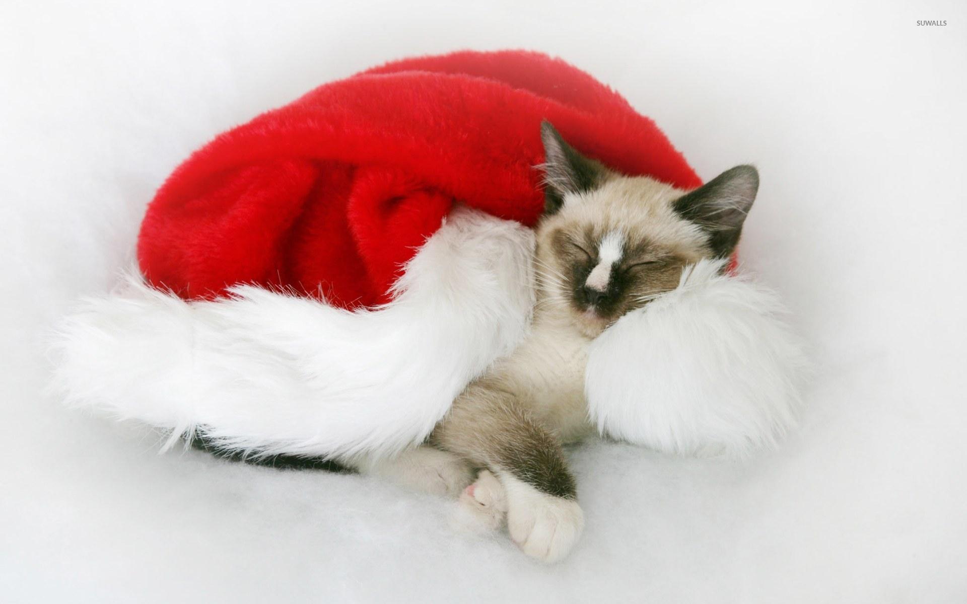 Christmas Kitten Wallpaper Animal Wallpapers 9981