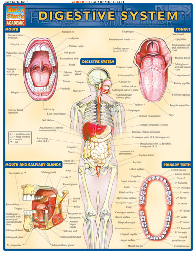 BarCharts Digestive System Quick Study Guide - Anatomy ...