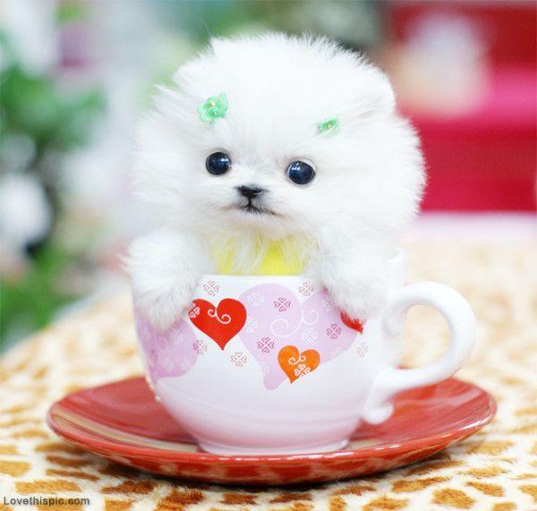 cute images pets