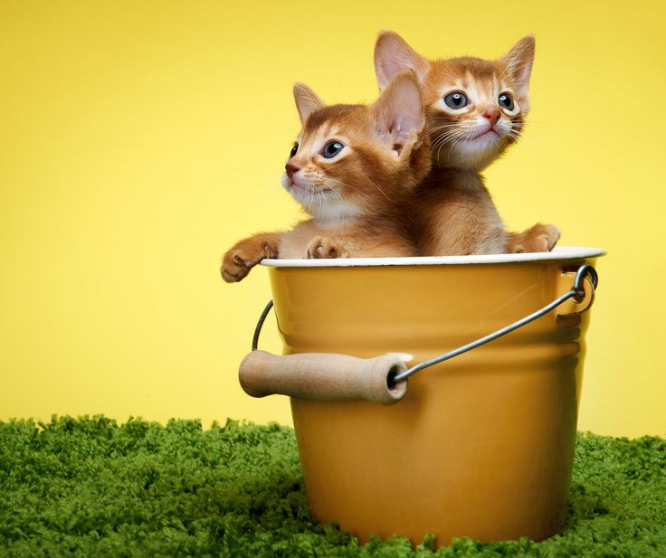 cute images cats