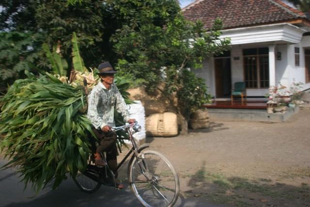 farmer in rural indonesia