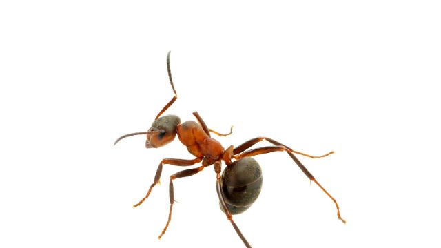 Do Ants Like Vinegar How Really Affects