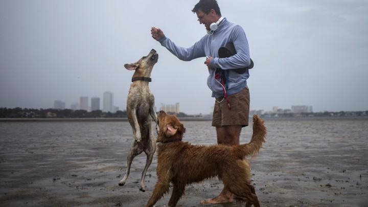 Irma s Storm Surge Is Draining Beaches of Their Water   The Atlantic A man plays with two dogs in the drained bed of Hillsborough Bay with the  Tampa