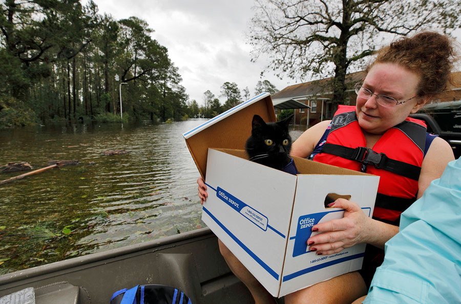 Hurricane Florence  Pet Rescues in Photos   The Atlantic Carla Ramm checks on her cat Jackjack after they were loaded onto a boat  during their rescue from rising floodwaters in Leland  North Carolina  on  September