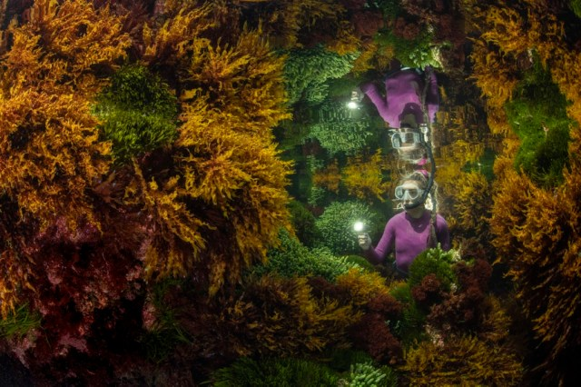 A person is seen underwater, with snorkeling gear, among lots of colorful seaweed.