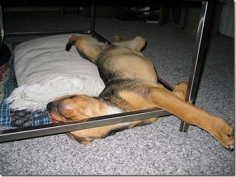 https://i1.wp.com/cdn.thebarkpost.com/wp-content/uploads/2014/03/sleeping-puppy-funny_thumb.jpg