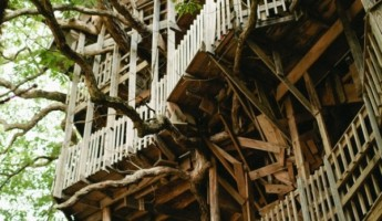 The Minister S Treehouse