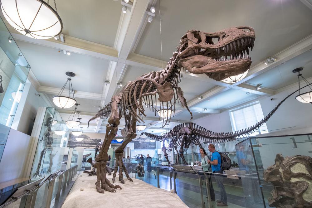 Museo Americano de Historia Natural, Nueva York