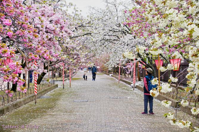 The Most Beautiful Parks In Osaka