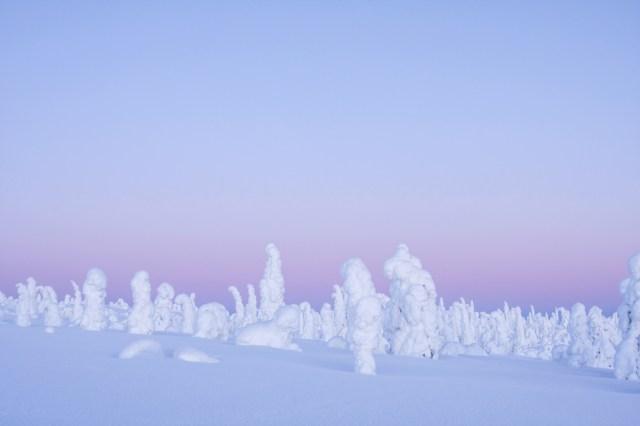 Credit: Shutterstock/Kersti Lindstrom