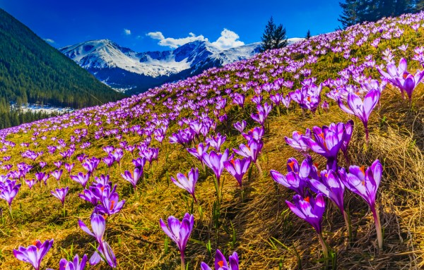 15 Bloomin' Beautiful Photos of Spring From Around the World
