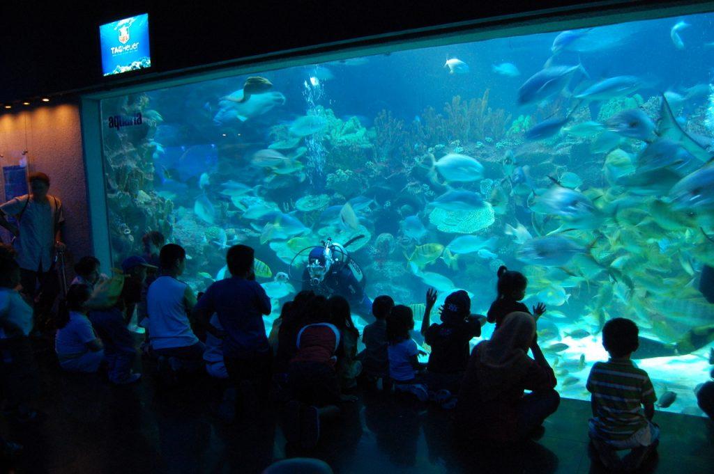 Aquaria   Transferzs