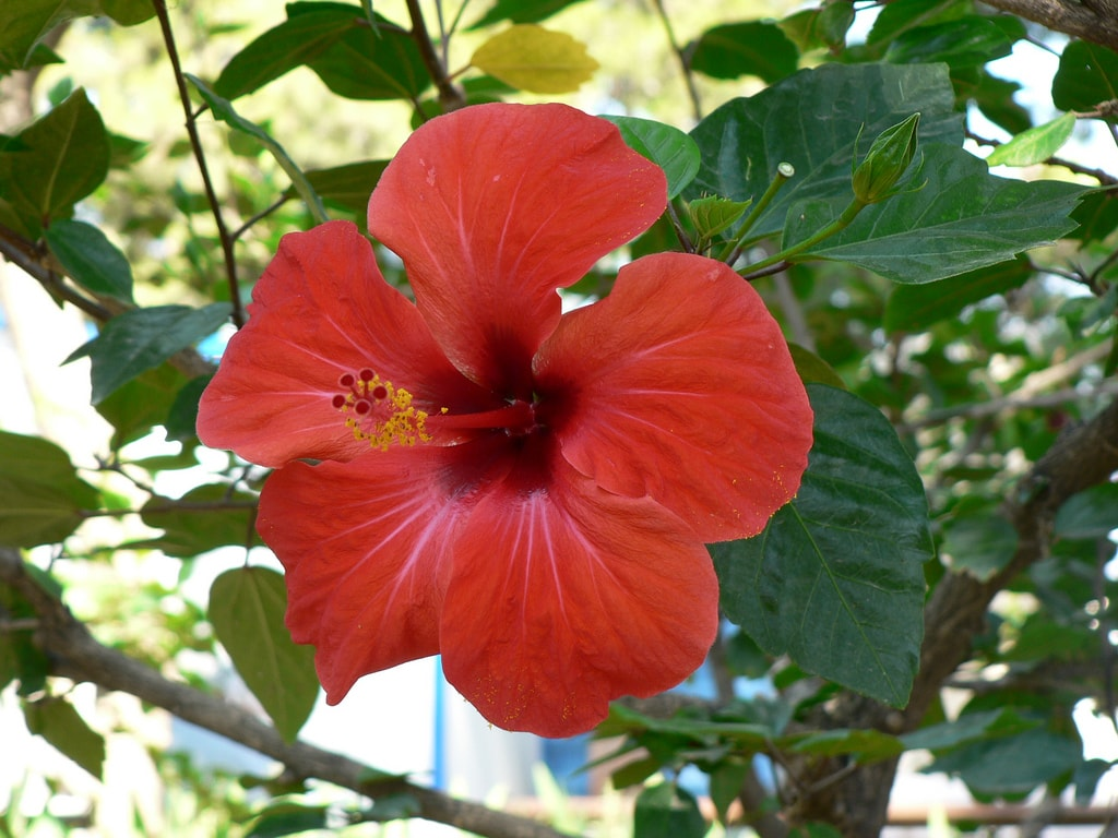 The Flora And Fauna Of Puerto Rico
