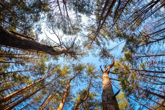 غابة خميلنيك أوكرانيا