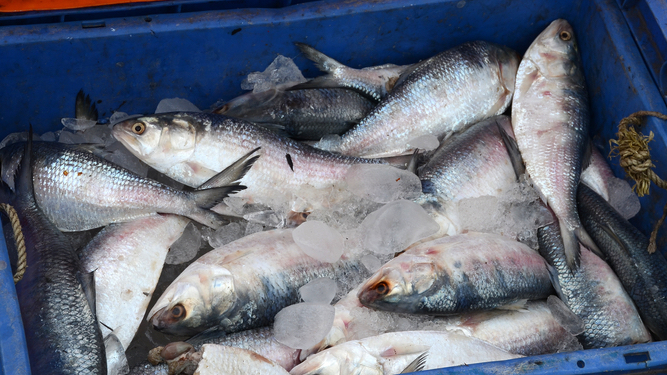 Brexit talks stalled by UK discussing 400 million individual fish