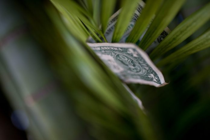 a $1 bill in a fern frond