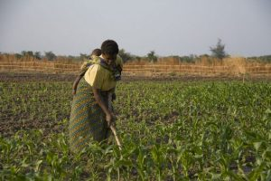 Most African farmers are women. Credit: IPS