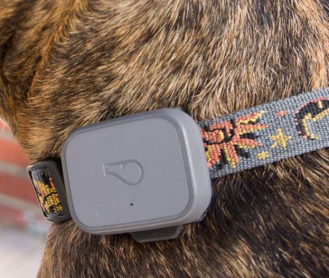 The Best Gps Trackers For Cats And Dogs Reviews By Wirecutter A New York Times Company