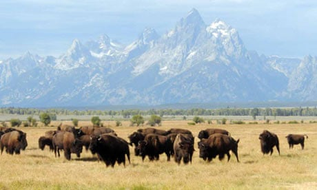 Temperate Grasslands (North American Plains) - ThingLink
