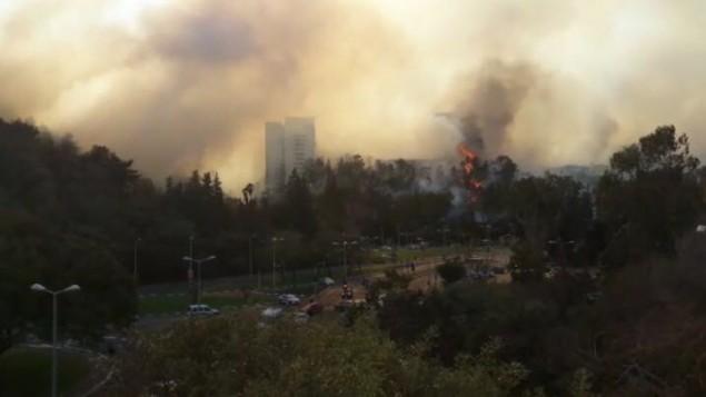 Un incendie de forêt près de Haïfa le 24 novembre 2016 (Crédit : Police d'Israël)