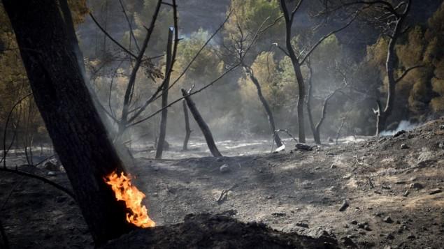 Les flammes d'un feu de forêt quia  dévasté Haïfa le 25 novembre 2016., nécessitant l'évacuation de dizaines de milliers d'habitants. (Crédits : Gili Yaari /Flash90)