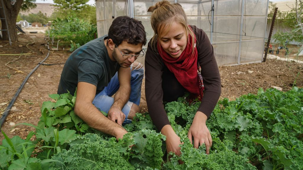 Students working together at the Arava Institute