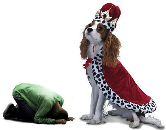 Image result for uomo schiavo del cane