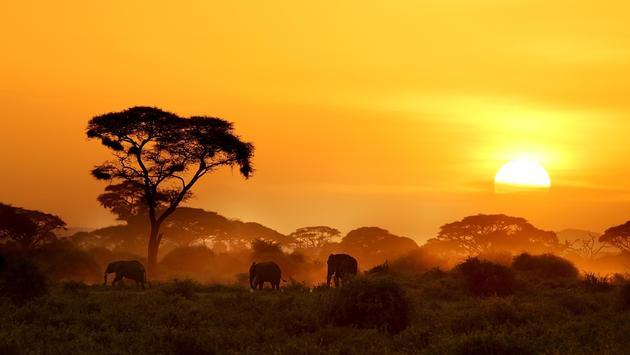 The Latest On The African Tourism Board TravelPulse