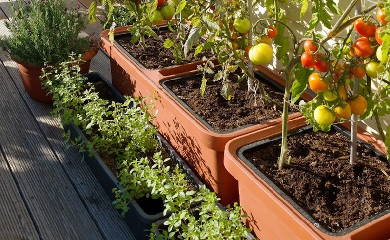 Self Care Garden Planters Berberis Self Watering Planter
