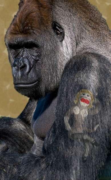 Tattooed Primates Inked Monkeys Apes Amp Gorillas Show