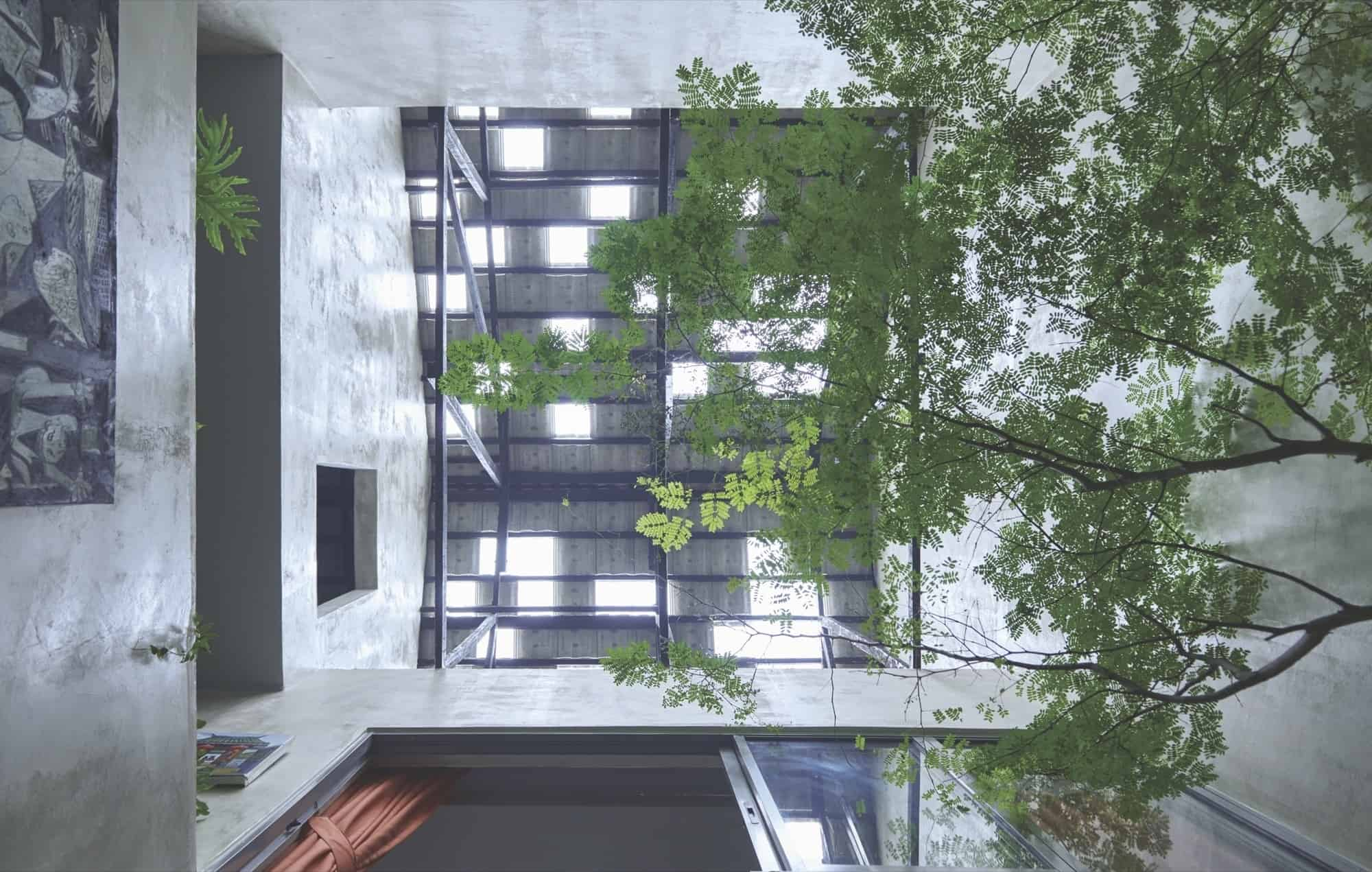 Trees And Shrubs Create Faux Courtyard Inside House