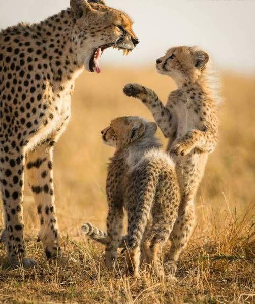 anneler kızarsa