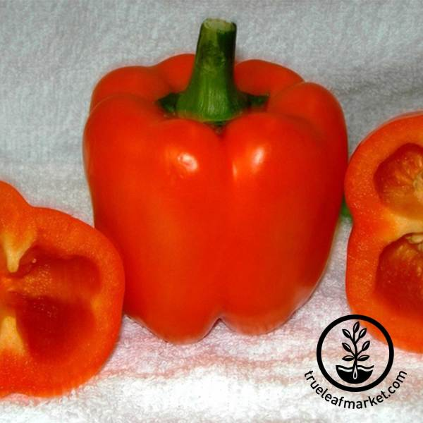 Garden Peppers Seeds Growing Vegetables Page 2