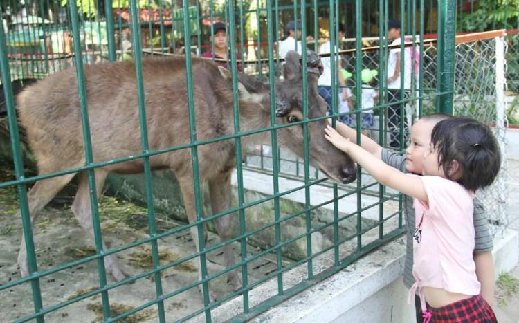 Vườn thú 30 năm tuổi, vẫn phải giải thể vì ngày càng teo tóp - Ảnh 1.