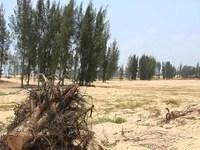 Vụ phá rừng ở Phú Yên: Thanh tra Chính phủ tiếp tục kiểm tra dự án New City