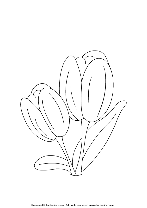 Tulip Coloring Sheet Turtle Diary