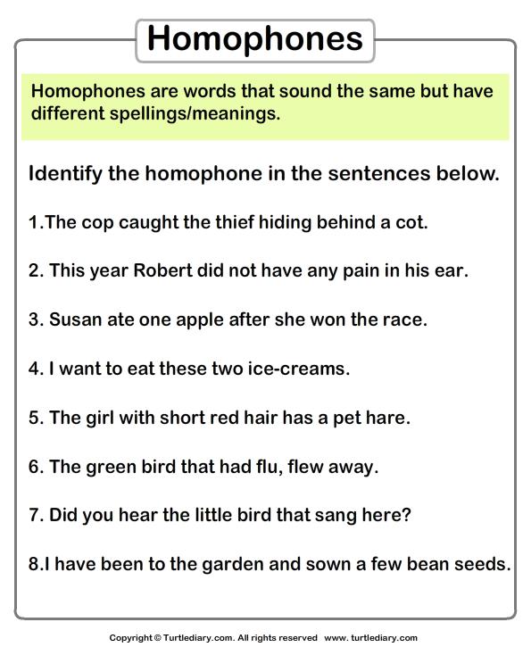 Identify Homophones Worksheet