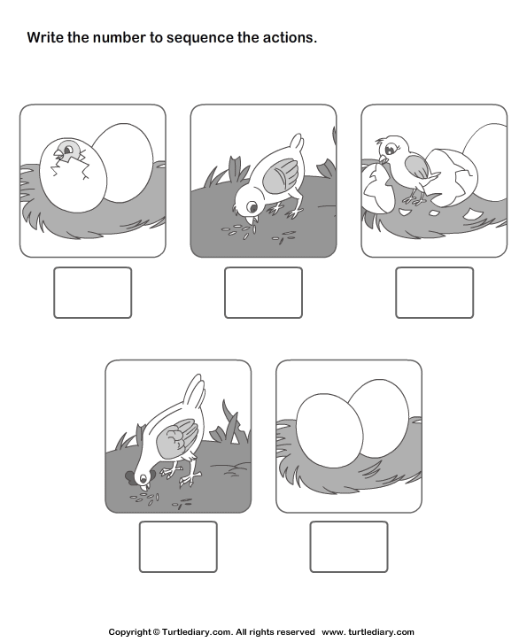 Picture Sequencing Birth Of A Chicken Worksheet