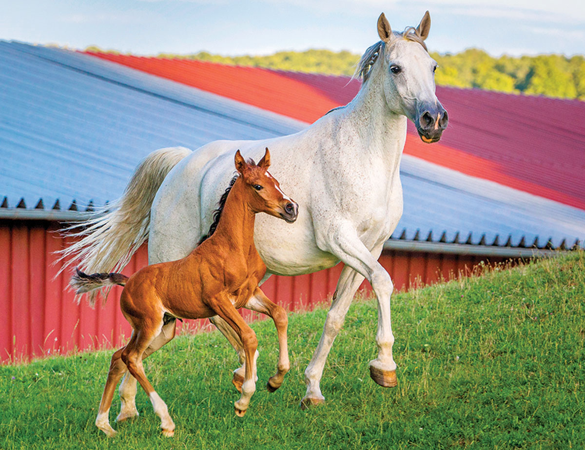 Mommy And Baby Farm Horses 100 Pieces Lafayette Puzzle
