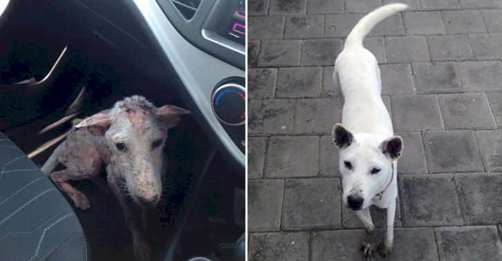 UNILADs This Desperate Dog Jumped Into Somebodys Car And Her Life Was Never The Same Again image