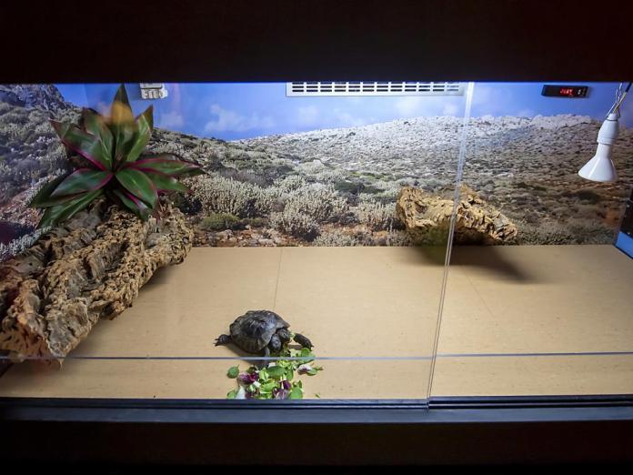 Janus đã đi một vòng quanh hồ cạn mới của mình, nằm ở tầng của phòng trưng bày bò sát.