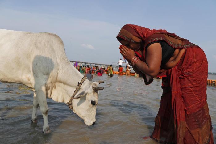 Mist als Schatz für die Armen: Wie die heilige Kuh in Indien beim Bauen hilft
