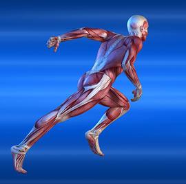 • Exercices de mobilité