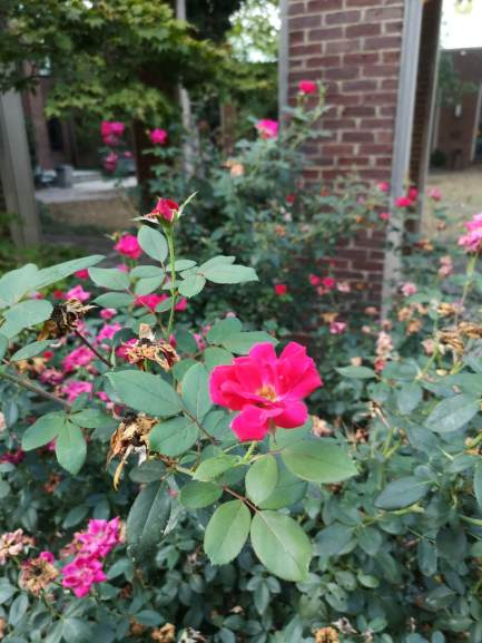 Visiting the Rose Gardens, from Social 'Dore @lrodezno