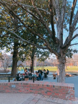 Students lounging in Fleming Yard, from @charlotteggolden
