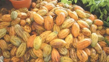 Yobe farmers charge govt. on a ready market