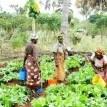70 per cent of farmers in Nigeria are women ―SWOFON